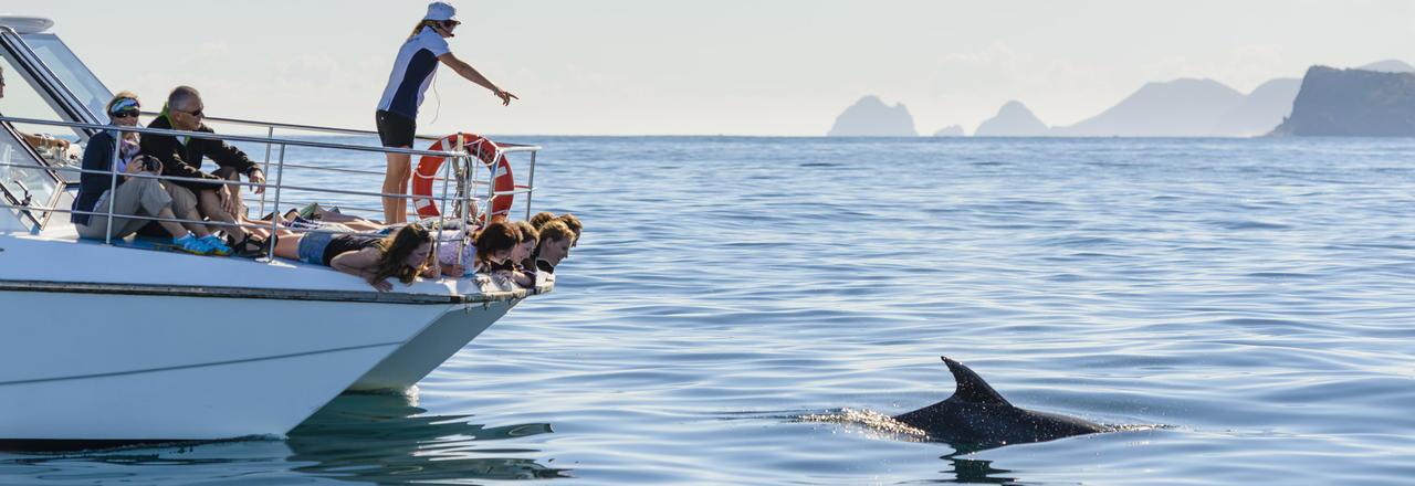 Dolphins in Kaikoura New Zealand
