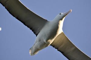 Albatross Dunedin