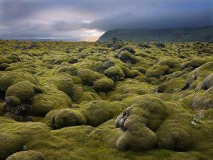 Iceland_Lava_field_courtesy_Daily_Telegraph